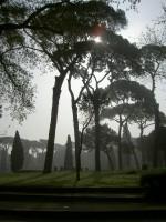 Pine trees, Villa Borghese